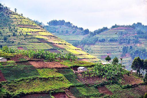 After the Rainforest, Uganda (15277311729)