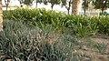 Alain al jaheli park ,United Arab Emirates - panoramio (48).jpg