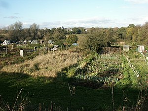 Allotments and factory, Hellesdon. People grow...