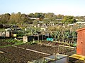 Allotments at Twyford - geograph.org.uk - 1587735.jpg