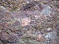 Alluvial polymict conglomerate (Mount Rogers Formation, Neoproterozoic, 750-760 Ma; Fox Creek roadcut, west of Troutdale, Virginia, USA) 1 (30383284752).jpg