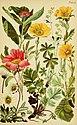 Alpenflora; die verbreitetsten Alpenpflanzen von Bayern, Österreich und der Schweiz (1922) (17488862503).jpg