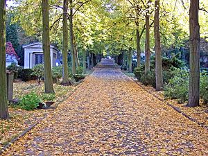 Alter St.-Matthäus-Kirchhof -  Way through the cemetery