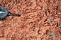 Alto Araguaia - State of Mato Grosso, Brazil - panoramio (1086).jpg