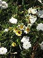 Amin al-Islami Park - Trees and Flowers - Nishapur 056.JPG