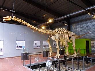 Insular dwarfism - Image: Ampelosaurus mount 4