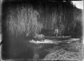 An unidentified man in a scow being towed by a horse, on the Waipapa River, near Rangiahua, 1918 ATLIB 301497.png