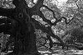 Angel Oak001.jpg