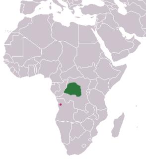 Angolan kusimanse species of mammal