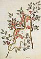 Anguinis viridis Catesby 1743.jpg