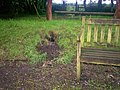 Animal Activity at Old School Garden, Llanteg - geograph.org.uk - 1388789.jpg