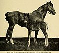 Animal husbandry for schools (1913) (17573770914).jpg