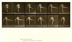 Animal locomotion. Plate 369 (Boston Public Library).jpg