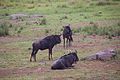 Animals at Pilanesberg National Park 8.jpg