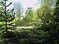 April - Spring Botanischer Garten Freiburg - 2016 - panoramio (15).jpg