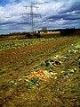 April Frühling Rhine Valley winter apple - Deutschland magic Germany 2013 - panoramio (1).jpg