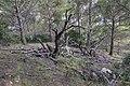 Arbre mort - Réserve naturelle régionale de Sainte Lucie.jpg