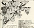 Aristocratic seeds - for your 1937 garden (1937) (20146505108).jpg
