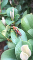 Arizona Paper Wasp.png