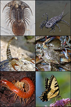 Arthropod - Wikipedia