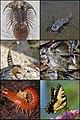 Arthropoda.jpg