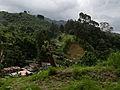 Asseri Costa Rica 2011.jpg