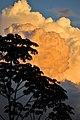 Atardecer en la Reserva Mbaracayú 2.jpg