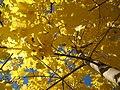 devinette plantes verte ?? 120px-Autumn2