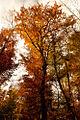 Autumn (5131280981).jpg