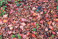 Autumn (fall) leaf litter.jpg