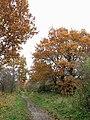 Autumn colours beside the Marriott's Way - geograph.org.uk - 1042819.jpg