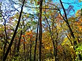Autumn in Devils Lake State Park - panoramio (2).jpg