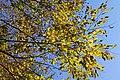 Autumn leaves at Ipponsugi pass - panoramio.jpg