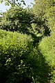 Avon Valley Path at Kingston - geograph.org.uk - 1942887.jpg