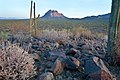 BLM Winter Bucket List -10- Ironwood Forest National Monument, Arizona, for Mild Temperatures and Winter Photography (15551257123).jpg