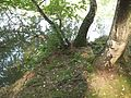 Barbora (rybník), břeh IV.jpg