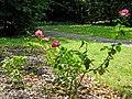 Battishill Gardens - geograph.org.uk - 1363617.jpg