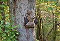 Baum überwächst Schild.jpg