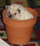 Baxter flower.jpg