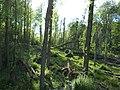 Bayerischer Amazonas - Isarmündung - panoramio.jpg
