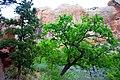 Beautiful Green Tree dyeclan.com - panoramio.jpg