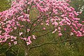 Beechwood Park Magnolia.jpg