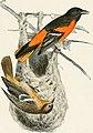 Bird-lore (1907) (14755601365).jpg