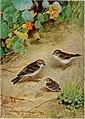Bird-lore (1915) (14568666760).jpg