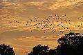 Birds in the sky (9385283256).jpg