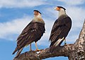 Birdsflorida vierawetlands (17550845399).jpg