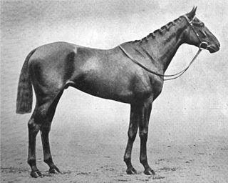 Black Jester British-bred Thoroughbred racehorse
