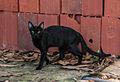 Black cat 666.jpg