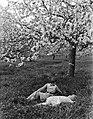 Bloeiende fruitboom in de Betuwe met van der Polls stiefdochters Hans en Renée, Bestanddeelnr 189-1394.jpg
