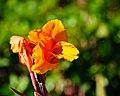 Blossom Special (6333449468).jpg